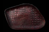 Gaboratory Alligator Textured Leather Gun Tray  [Red]